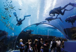 Divers and Onlookers in an Aquarium Dives doing scuba training
